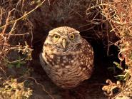 vista-view-park_owl2