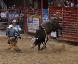 Davie Rodeo-2