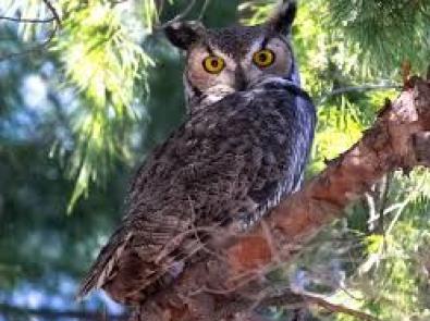vista-view-park_owl5