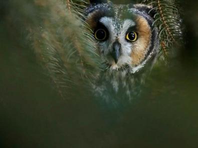 vista-view-park_owl8