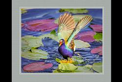 Everglades Color Palette