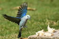 Tropical Bird #4