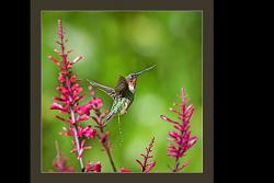 Not Your Typical Hummingbird Shot