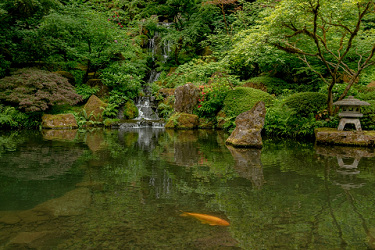Peace at the Japanese Garden