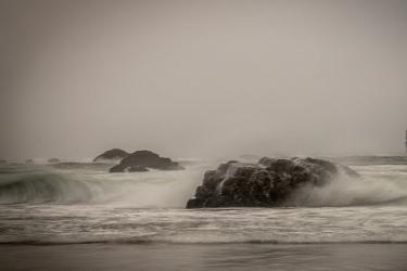 Untamed Waves